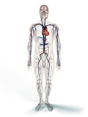 Микардин диета и вес