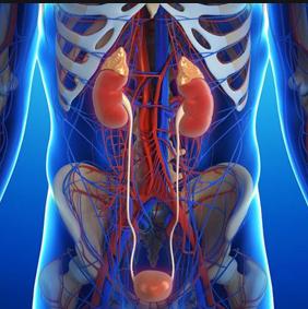 МРТ мочевыделительной системы